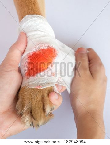 owner bandage to dog leg and some blood are bleeding