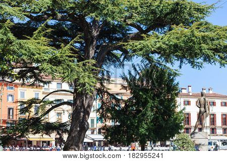 Tourists, Cedar Tree, Bronze Statue On Piazza Bra