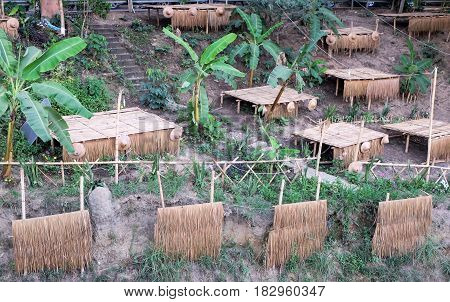 Field tents on the bamboo and banana tree at side