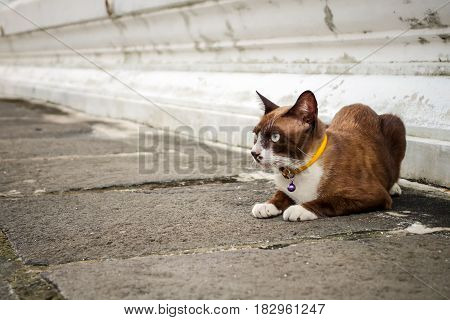 Brown cat with yellow collar sitting and looking for something