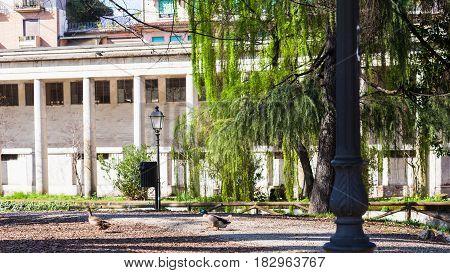travel to Italy - duck and drake in urban public park Giardini Salvi (Garden of Valmarana Salvi) in Vicenza city in spring
