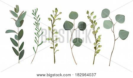 Eucalyptus thyme foliage natural branches with leaves tropical elements in watercolor style set collection. Vector decorative beautiful cute elegant illustration for design