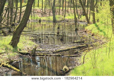 floodplain forest with some fallen trnks and rotting remnants of trees in spring
