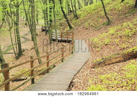 wooden catwalk in the forest in spring