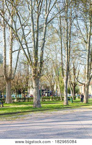 Trees In Urban Public Garden Parco Del Te