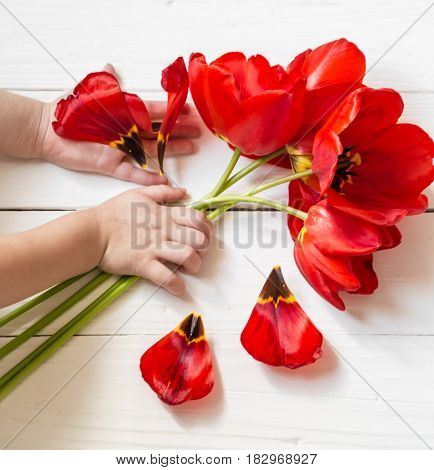 Tulips In The Hands Of A Child