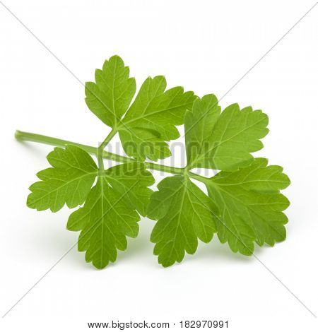 Fresh parsley herb leaves  isolated on white background