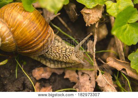 Snail Shell Horns Nature Sunny day Macro