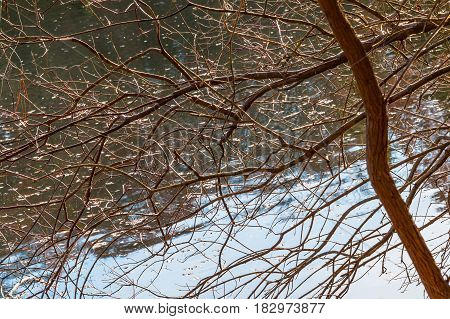 The bare branches and the tree trunk on the background of lake