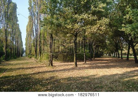 Milan (Lombardy Italy): paths in the park known as Parco Nord in october poster