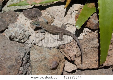 approach to an iguana in his cave and on a rock in the forest day