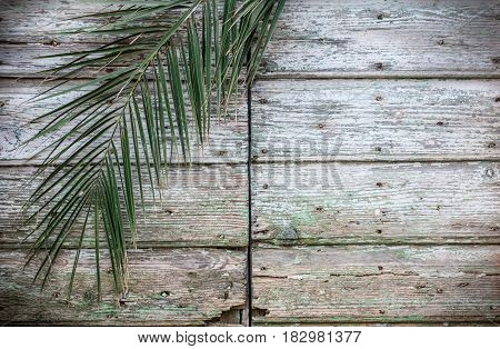 Old vintage traditional ancient rough wooden door and palm tree branch as exotic tropical tourism travel background