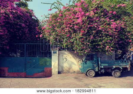 Amazing house with bougainvillea flowers trellis in purple color on brick wall at Ho Chi Minh city Viet Nam on day poster