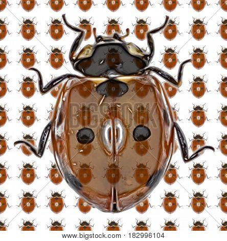 Ladybug Photo Pattern - Seven-spot Ladybird on white Background