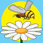 Busy bee is hovering over a daisy poster