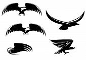 Heraldry eagle symbols and tattoo isolated on white poster