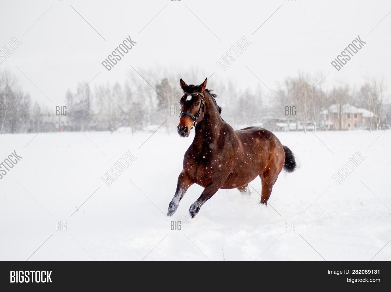 Beautiful Brown Horse Image Photo Free Trial Bigstock