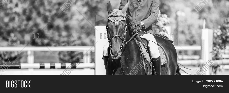 Horse Horizontal Black Image Photo Free Trial Bigstock