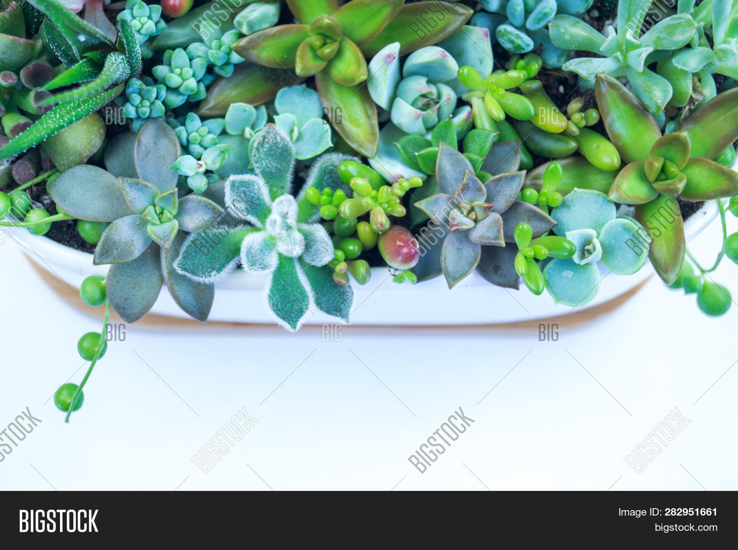 Composition Green Blue Image Photo Free Trial Bigstock