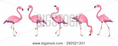 Pink Flamingos. Cute Flamingo Animal Exotic Nature Wild Fauna Zoo Bird Beak Plumage Legs Tropical Af