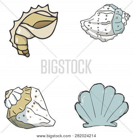 Set Cockleshell Illustration Vector Geometric Drawing Shells Font Color Element Sea Ocean Life Yello