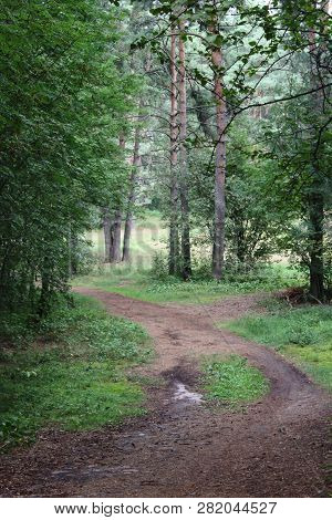 Green mysterious forest. Northern coniferous mystical forest. Walk in the woods. Tourism in the North. Nature reserve. Beautiful green mystique forest in the rain. Drops of water on the grass. Forest road. Green coniferous Northern forest