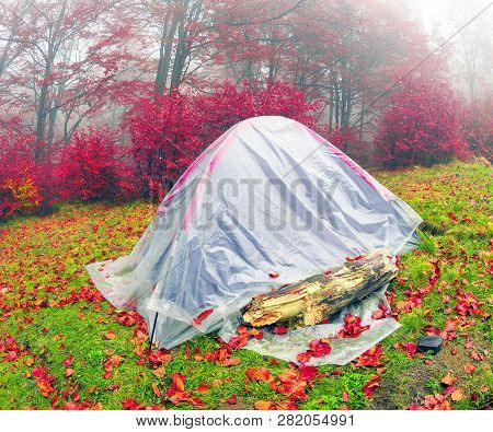 Tent Backfilled Yellow Leaves