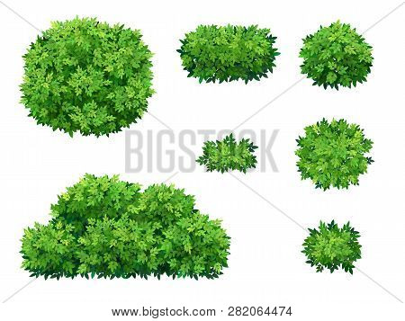 Set Of Green Bush And Tree Crown Of Different Shapes. Ornamental Plant Shrub For Decorate Of A Park,