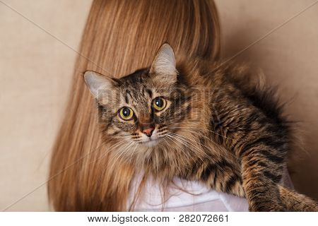 Funny Fluffy Gray Striped Cat On A Womans Shoulder. Beautiful Tabby Cat On The Shoulder Of A Blonde