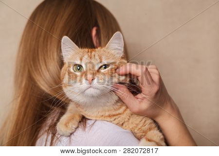 Happy Ginger Tabby Cat On The Womans Shoulder. Beautiful Striped Red Cat On The Shoulder Blonde, Bei