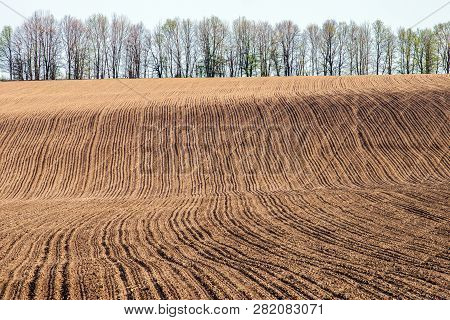 Plowed Field On A Hillside On The Background Of A Row Of Trees. Selective Focus.