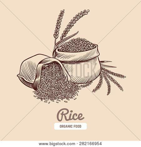 Rice Background. Hand Drawn Bowl With Rice Grains And Ears. Japanese Food Vector Concept. Illustrati