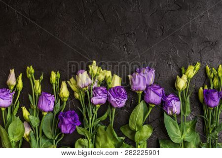 Purple Eustoma Flowers On Black Texture Background. Copy Space, Top View