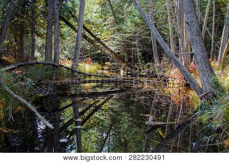 Forest River Wetlands. Hardwoods Forest Reflected In Wetland River Ecosystem In Hartwick Pines Of Mi