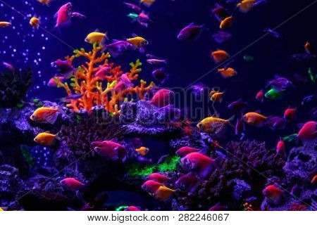 Macro Beautiful Fish Glo Tetra Fish Danio Rerio