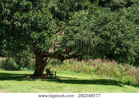 A Bench In The Shade Of A Tree In The National Botanical Gardens In The Natal Midlands, South Africa