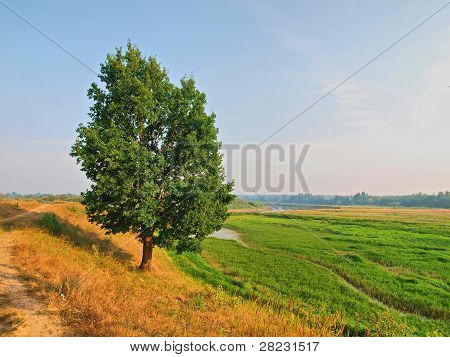 The Single Tree On The Meadow.