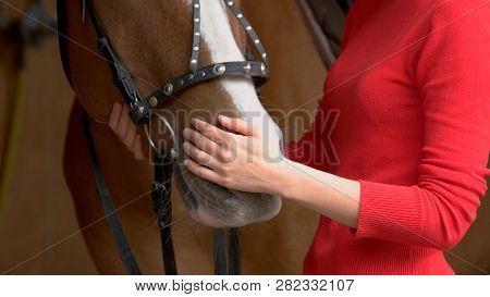 Close Up Hands Of Woman Hugging A Horse. Young Girl Petting Her Horse In Stable. Equine Therapy Conc