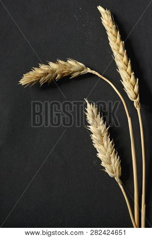 Wheat Ears On Black Paper Background, Close Up