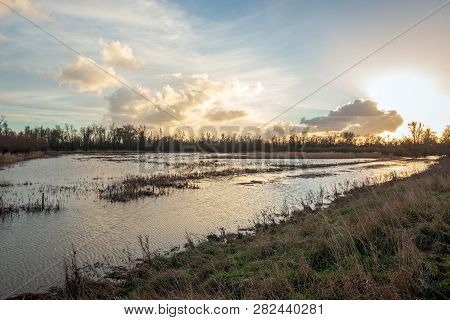Flooded Area In Dutch National Park Biesbosch Just Before Sunset At The End Of A Sunny Day In The Wi
