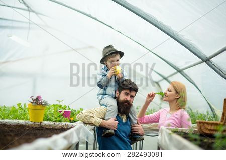 Happy Mothers Day. Happy Mothers Day Holiday. Happy Mothers Day With Family In Greenhouse. Happy Mot