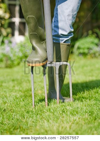 Woman gardener aerates garden lawn with a fork poster