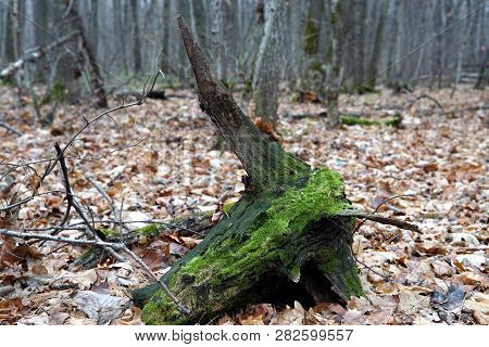 Bright Green Moss Background Textured In Nature. Natural Moss On Stones In Winter Forest Moss Covere