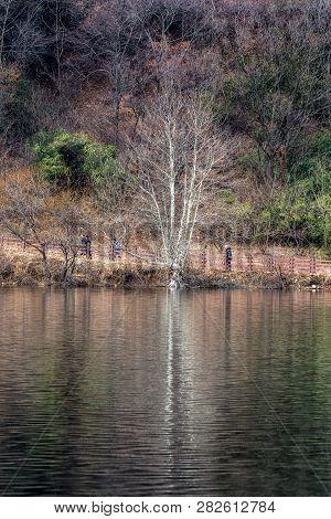 Geumpyeong Reservoir Trees Reflections