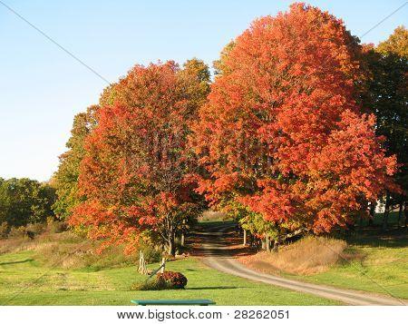 Autumn in Saratoga