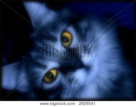 Dark Blue Cat,