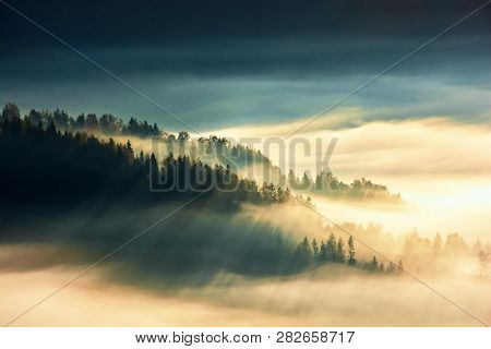 Forest Island On The Hill In The Sea Of Fog. View From The Top. Gorgeous Scenery At Sunrise. Wonderf