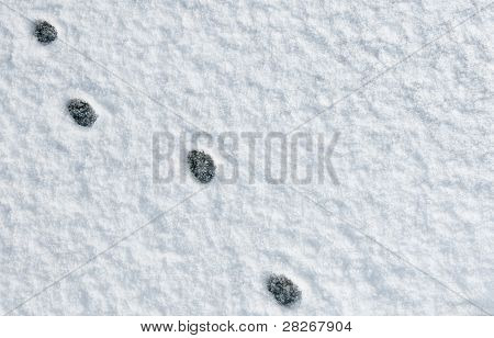 Cat Paw Footprints In The Snow