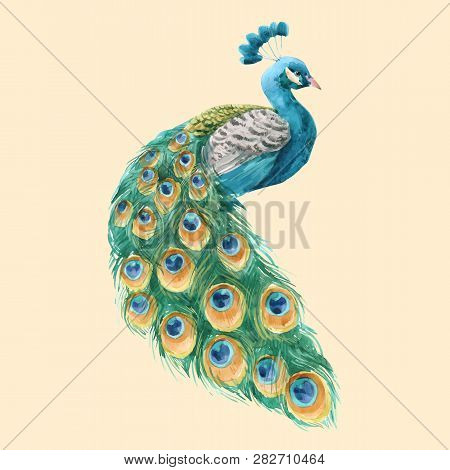 Beautiful Vector Illustration With Hand Drawn Watercolor Peacock