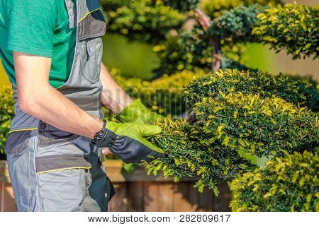 Caucasian Gardener Checking On His Plants. Garden And Landscaping Industry.